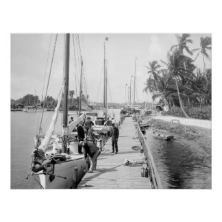 Miami Sailboats, 1905 Poster