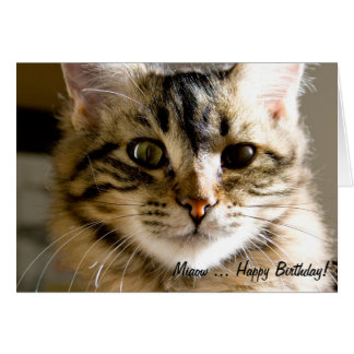 Miaow ... Happy Birthday! Greeting Card