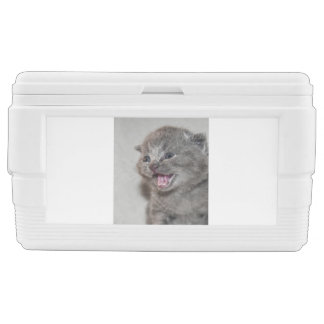 Miaowing grey Kitten Chest Cooler