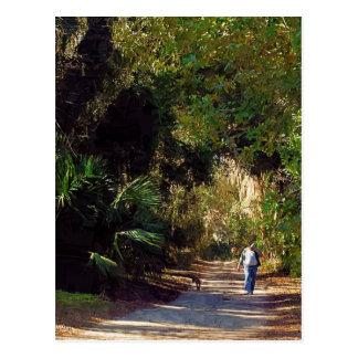 Micanopy, Florida Postcard