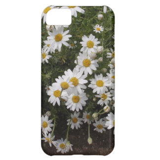 Michaelmas Daisies iPhone 5C Cases