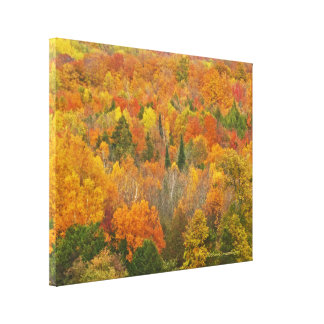 """MICHIGAN AGLOW WITH COLOR"" CANVAS PRINT"