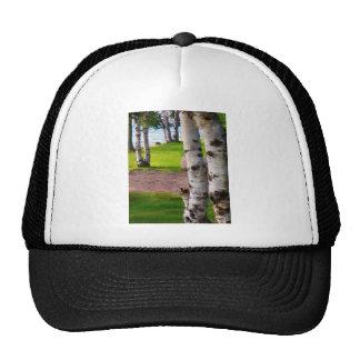Michigan Birch Trees By Lake Trucker Hat