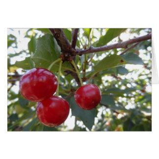 Michigan Cherries Card
