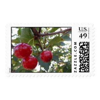 Michigan Cherries Stamp