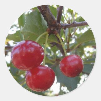 Michigan Cherries Stickers