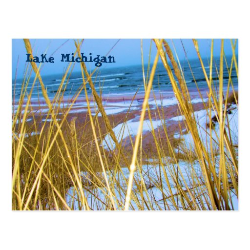 Michigan Dune Grass Post Card