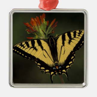 Michigan, Houghton Lake. Tiger Swallowtail on Metal Ornament