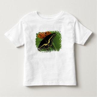 Michigan, Rochester. American Eastern Black Toddler T-shirt