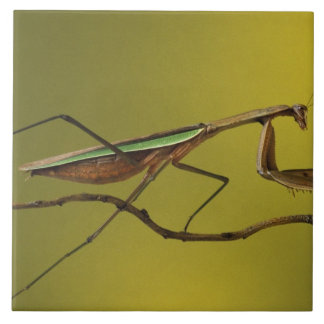 Michigan, Rochester Hills. Praying Mantis on Ceramic Tile