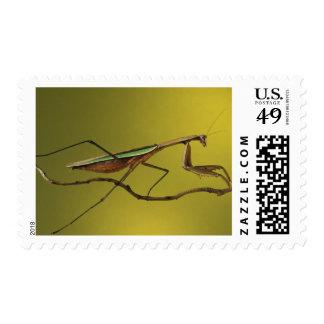 Michigan, Rochester Hills. Praying Mantis on Postage