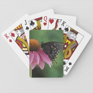 Michigan, Rochester. Spicebush Swallowtail encendi Cartas De Póquer