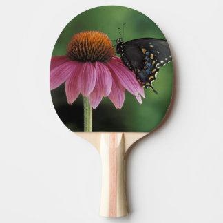 Michigan, Rochester. Spicebush Swallowtail encendi Pala De Ping Pong