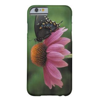 Michigan, Rochester. Spicebush Swallowtail Funda Barely There iPhone 6