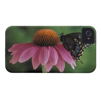 Michigan, Rochester. Spicebush Swallowtail Funda Para iPhone 4