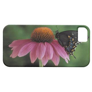 Michigan, Rochester. Spicebush Swallowtail Funda Para iPhone SE/5/5s
