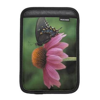 Michigan, Rochester. Spicebush Swallowtail on iPad Mini Sleeve