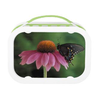 Michigan, Rochester. Spicebush Swallowtail on Lunch Box