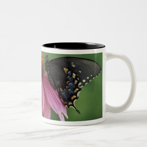 Michigan, Rochester. Spicebush Swallowtail on Two-Tone Coffee Mug