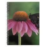 Michigan, Rochester. Spicebush Swallowtail on Notebooks
