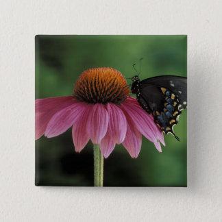 Michigan, Rochester. Spicebush Swallowtail on Pinback Button