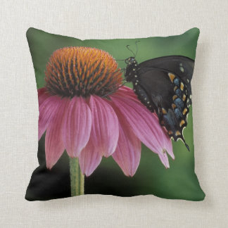 Michigan, Rochester. Spicebush Swallowtail on Throw Pillow