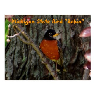 Michigan State Bird Robin