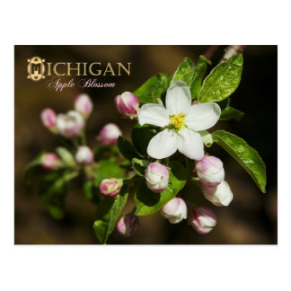Michigan State Flower: Apple Blossom Postcard