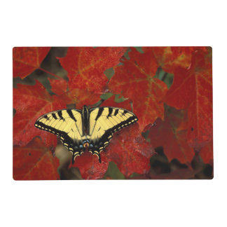 Michigan, Wetmore. Tiger Swallowtail on maple Laminated Placemat