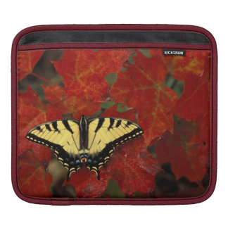 Michigan, Wetmore. Tiger Swallowtail on maple Sleeves For iPads