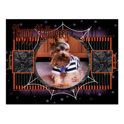 Mickey - Yorkshire Terrier - Shannon Postcards