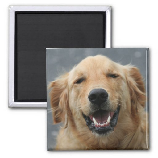 Micky - Labrador - Photo 5 2 Inch Square Magnet