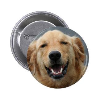 Micky - Labrador - Photo 5 Pins