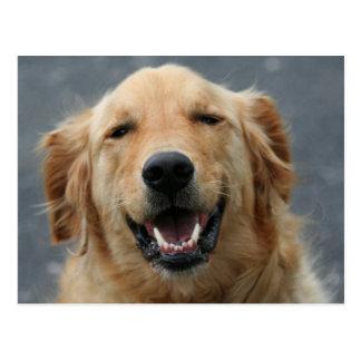 Micky - Labrador - Photo 5 Postcard