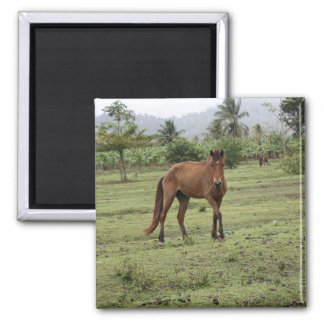 Micoud1 2 Inch Square Magnet