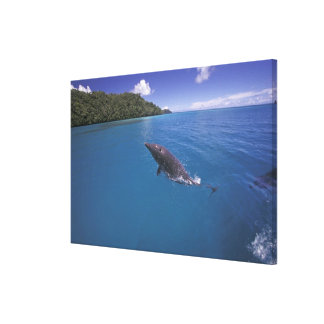 Micronesia, Palau Bottlenose dolphin Tursiops 2 Canvas Print