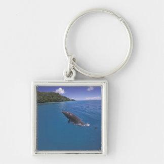 Micronesia, Palau Bottlenose dolphin Tursiops 2 Keychain