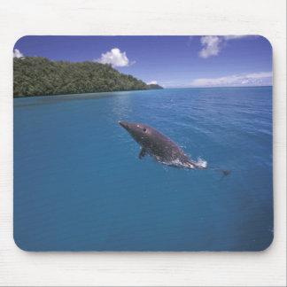 Micronesia, Palau Bottlenose dolphin Tursiops 2 Mouse Pad