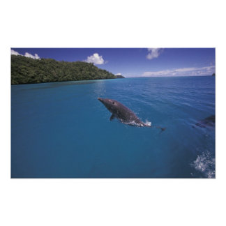 Micronesia, Palau Bottlenose dolphin Tursiops 2 Posters