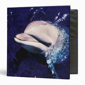 Micronesia, Palau Bottlenose dolphin Tursiops 3 Ring Binder