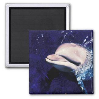 Micronesia Palau Bottlenose dolphin Tursiops Refrigerator Magnets