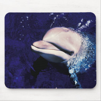 Micronesia, Palau Bottlenose dolphin Tursiops Mouse Pad