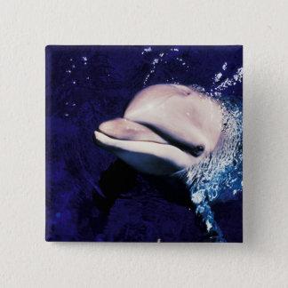Micronesia, Palau Bottlenose dolphin Tursiops Pinback Button