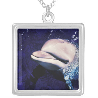 Micronesia, Palau Bottlenose dolphin Tursiops Square Pendant Necklace