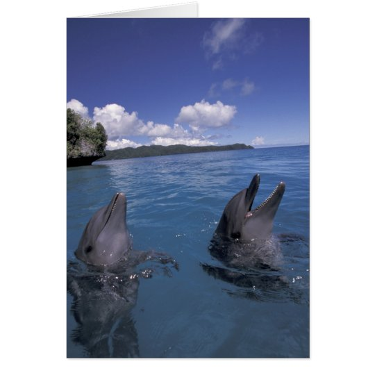 Micronesia, Palau Bottlenose dolphins Card