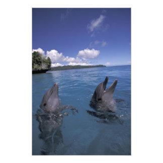 Micronesia, Palau Bottlenose dolphins Photo Print