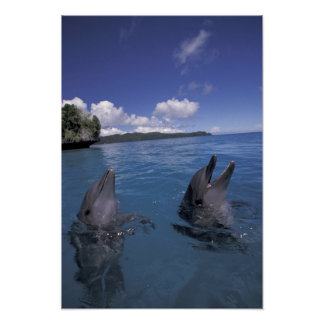 Micronesia, Palau Bottlenose dolphins Poster