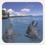 Micronesia, Palau Bottlenose dolphins Square Sticker