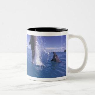 Micronesia, Palau Bottlenose dophin Tursiops Two-Tone Coffee Mug