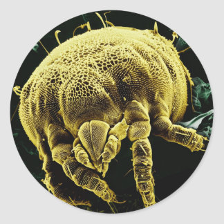 Microscopic Arthropod Acari Mite Lorryia Formosa Classic Round Sticker